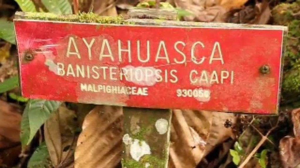 Ayahuasca: la soga del muerto