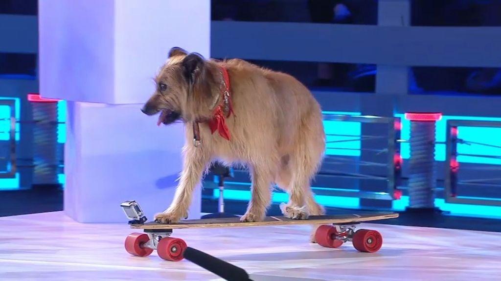 Theo, el perro deportista: ¡juega al baloncesto y monta en patinete!