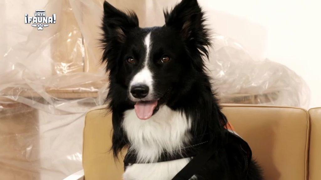 Eliot, un perro entrenado por un chico discapacitado para subir su autoestima
