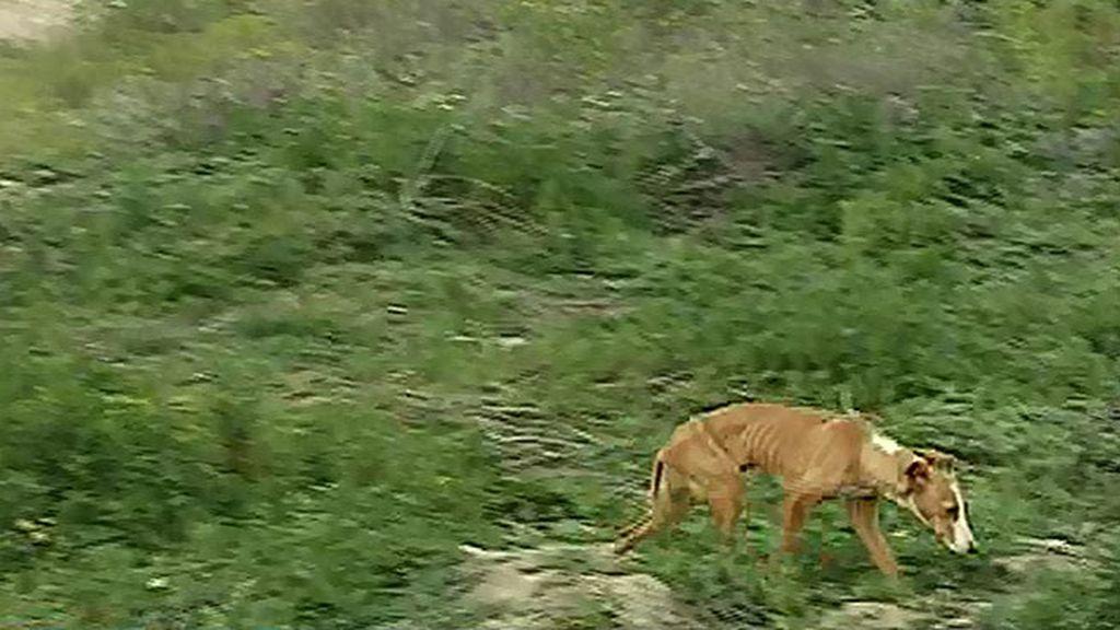 Ana Rosa, preocupada por un perro abandonado, pide que alguien lo adopte
