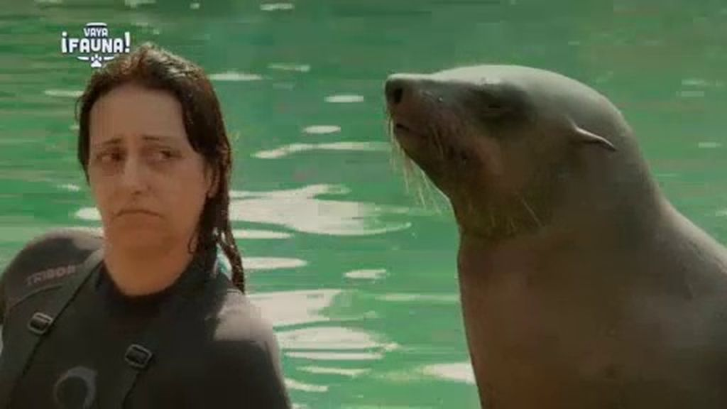 Yolanda Ramos cumple su 'sueño' de bañarse con osos marinos