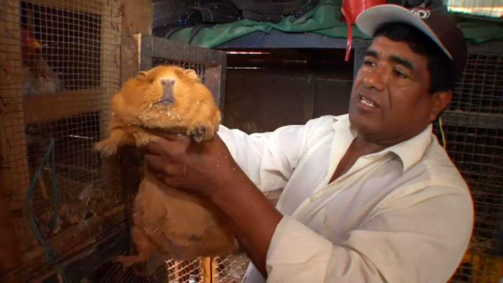 La calle de los animales, en busca de un regalo para una boda peruana
