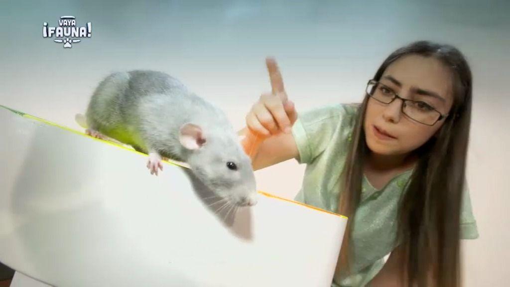 Remi, la rata azul de Iria