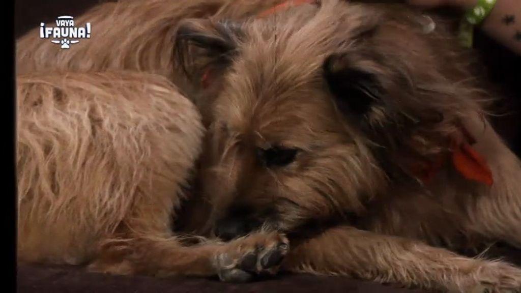 La triste historia de Theo: un perro que fue maltratado por su antiguo dueño