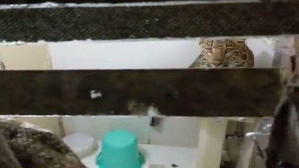videos xxx que no molesten con la edad y que no dure mucho animales gratis ourense