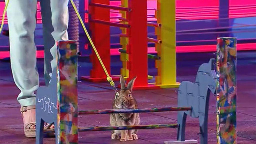 Nixon, el conejo de Jessie, hace una paradita en medio de la actuación para orinar