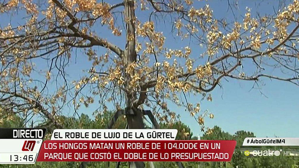 El árbol de 104.000 euros de la 'Gürtel' se está secando pese a los intentos de salvarlo