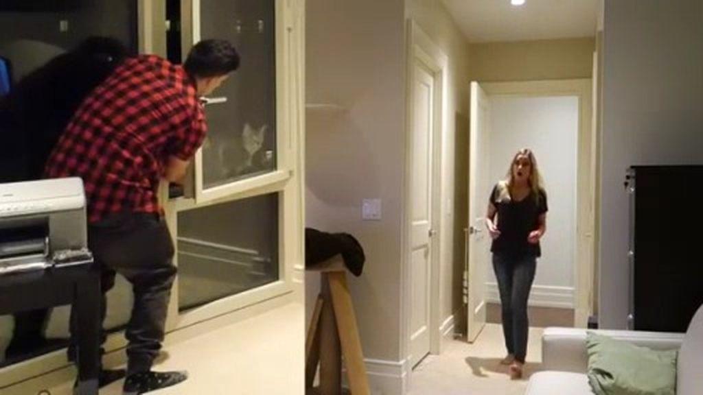 Engaña a su novia al hacerle creer que su gato se cae por la ventana
