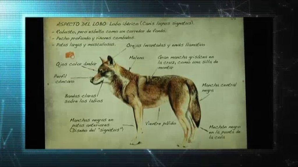Misterio 4.0: 'Cuadernillos digitales de Félix Rodríguez de la Fuente