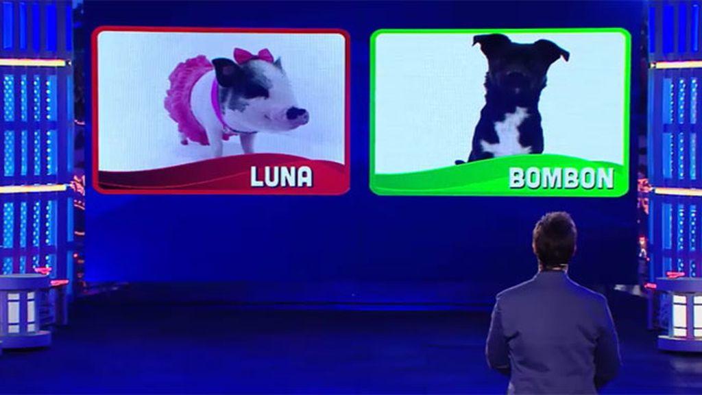Luna y Bombón se convierten en los repescados que estarán en la final