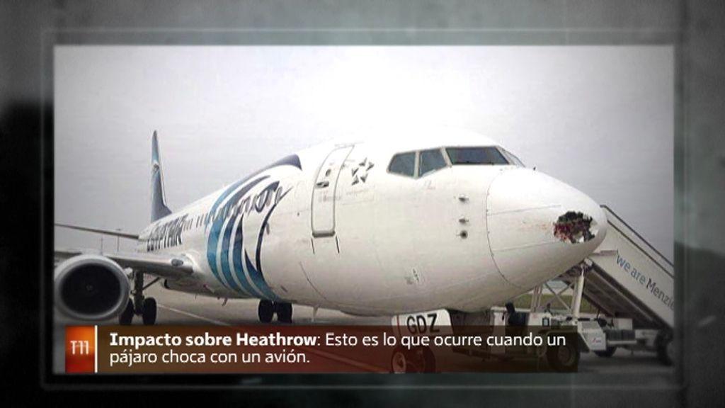 ¿Por qué la colisión de un pájaro con un avión ocasiona grandes destrozos?