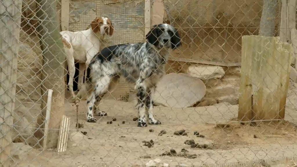 Perros abandonados salen de España para generar dinero a perreras italianas