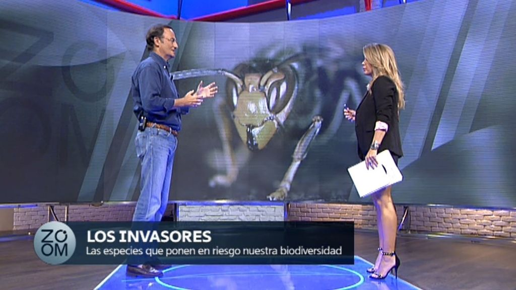 """González-Sitges, zoólogo:""""La avispa asiática acabará colonizando toda España"""""""