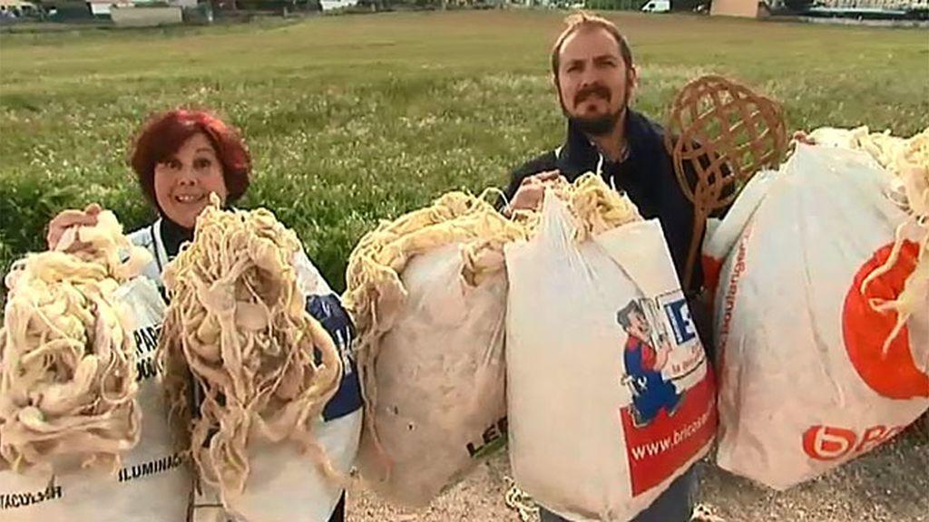 Vendo: 20 kilos de lana virgen procedentes de un colchón antiguo del siglo XIX
