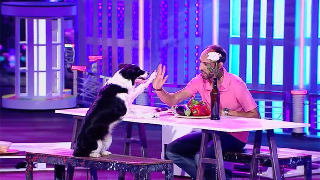 Samba, el perro que todo dueño desea ¡Ayuda en las labores del hogar!