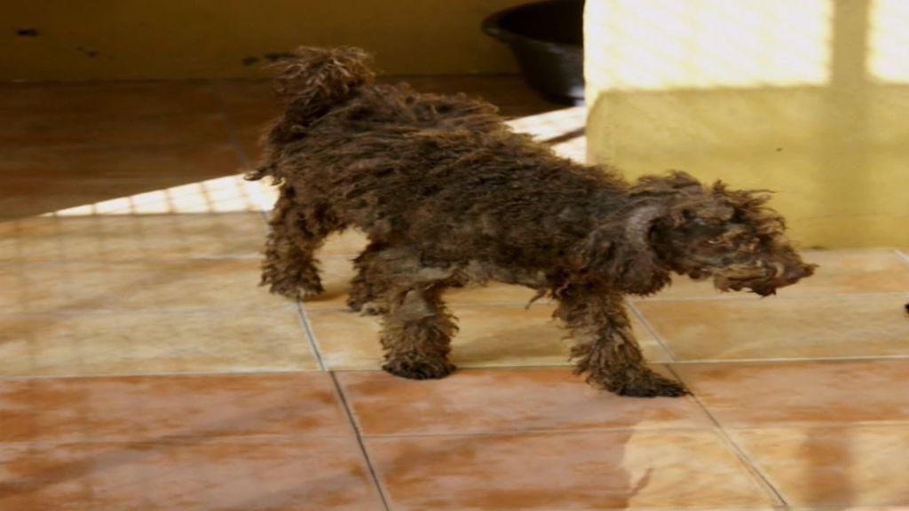 Una propietaria de una protectora conocida como 'la exterminadora de perros'