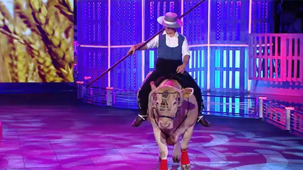 Simona, la vaca que se cree caballo