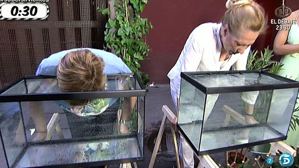 'Sálvame' pone a prueba los pulmones de los colaboradores bajo el agua