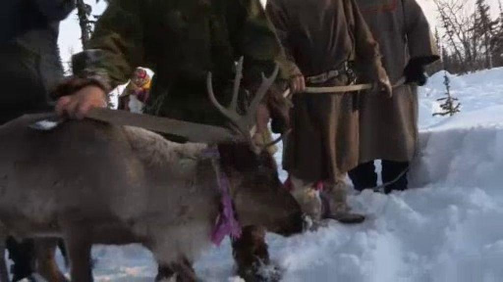 Jesús Calleja asiste al sacrificio de un reno por parte de los Nenets