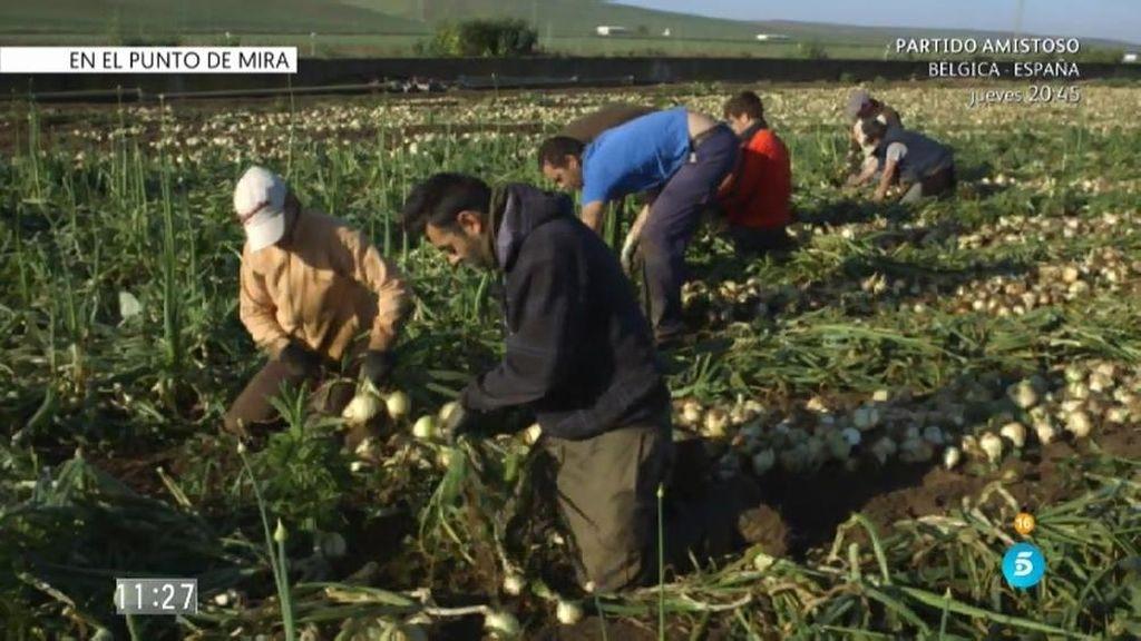 'En el punto de mira': Las víctimas de explotación laboral en el campo
