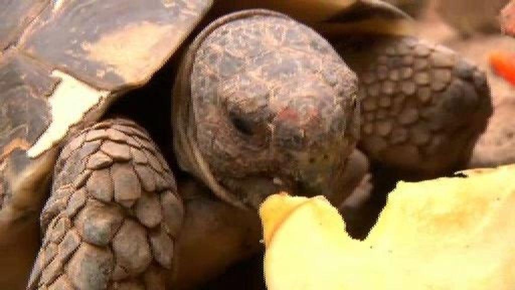 La tortuga europea y la tortuga tailandesa