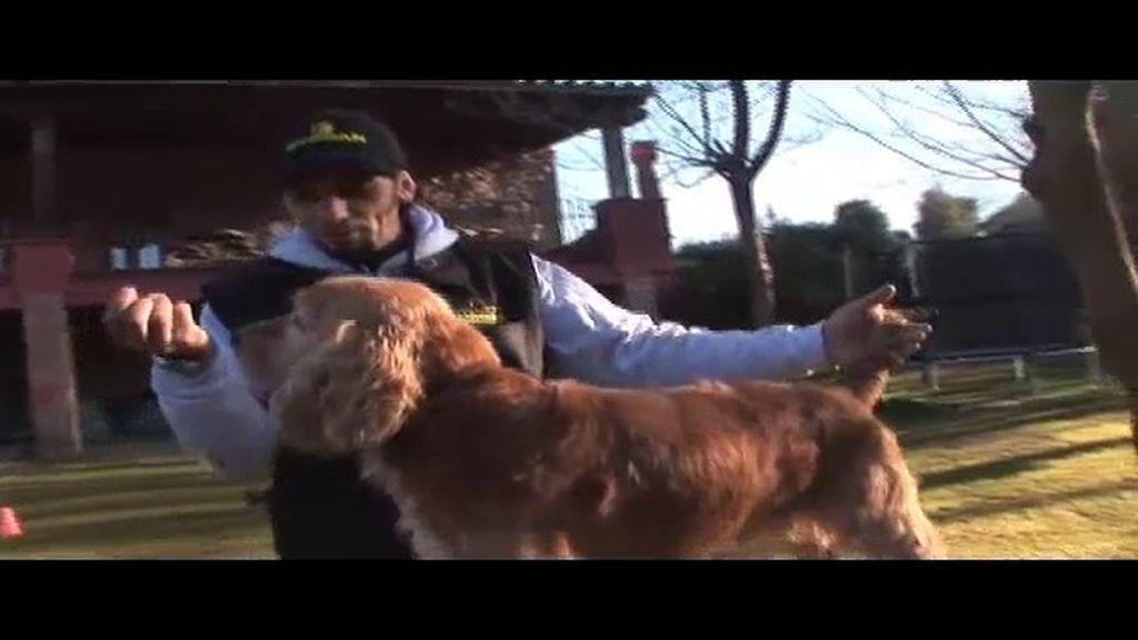Car: Un perro agresivo que está aprendiendo a convivir en familia