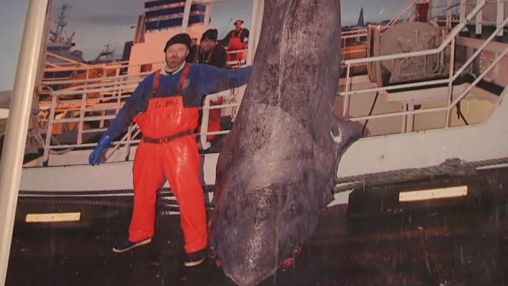 El tiburón podrido es un manjar en las bodas