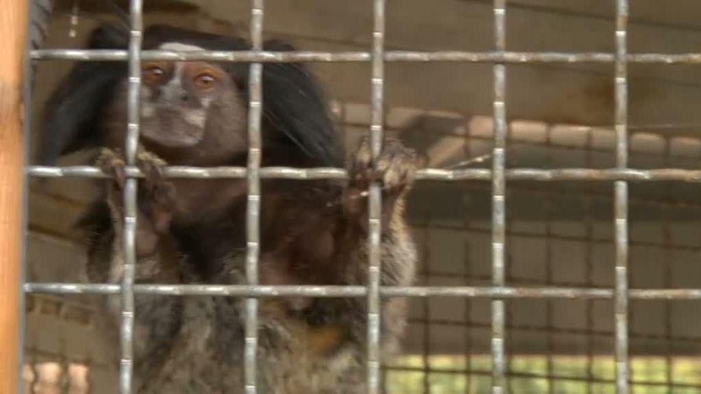 Frank de los monos