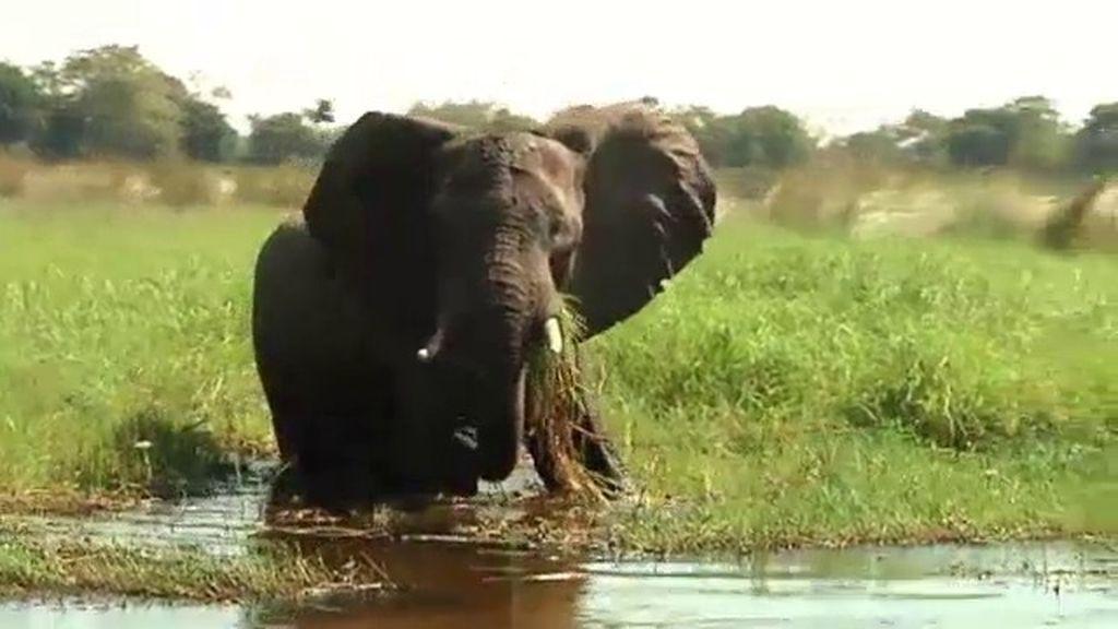 'Callejeros Viajeros: Safari en Botsuana' T07xP05