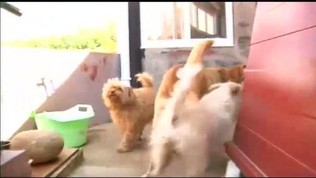 La casa de los perros