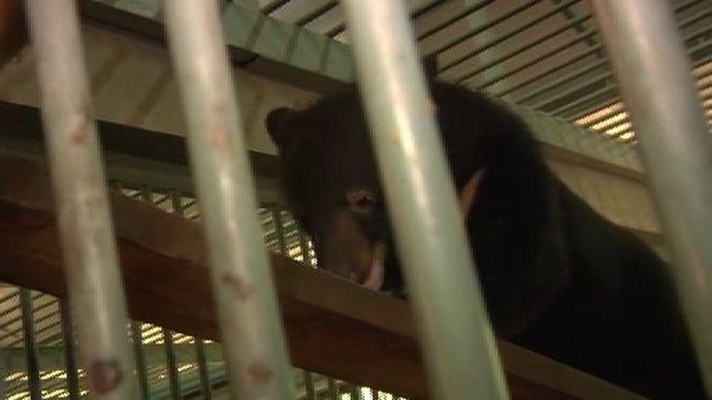 ¡Salvad a los osos!