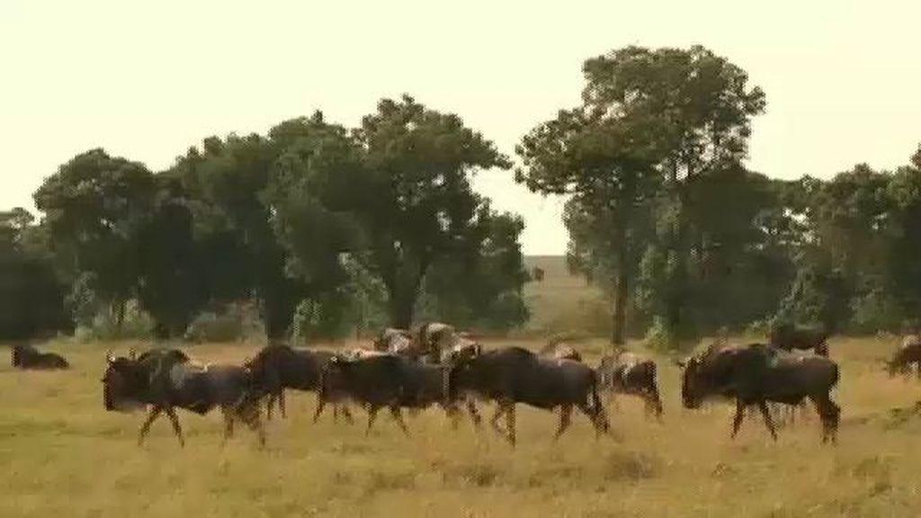 Masái Mara, es una de las reservas más espectaculares del mundo