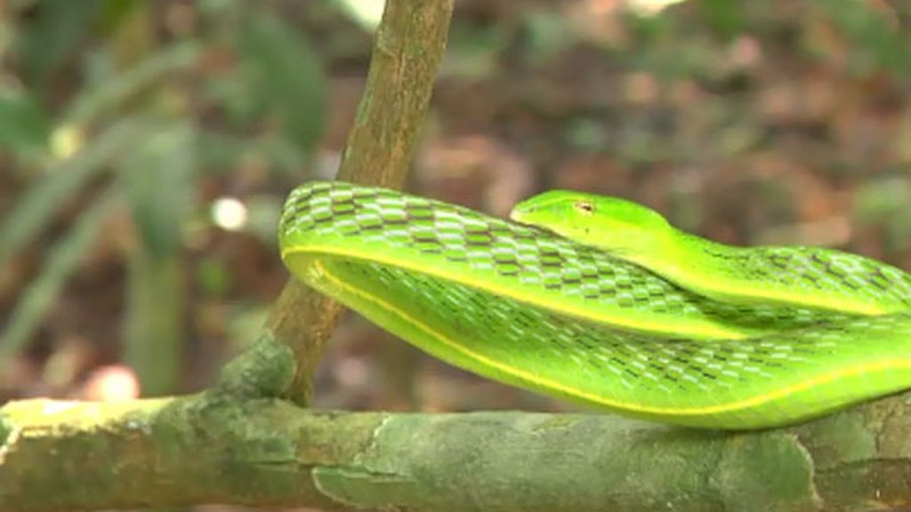 ¿Enfada el calor a las serpientes?