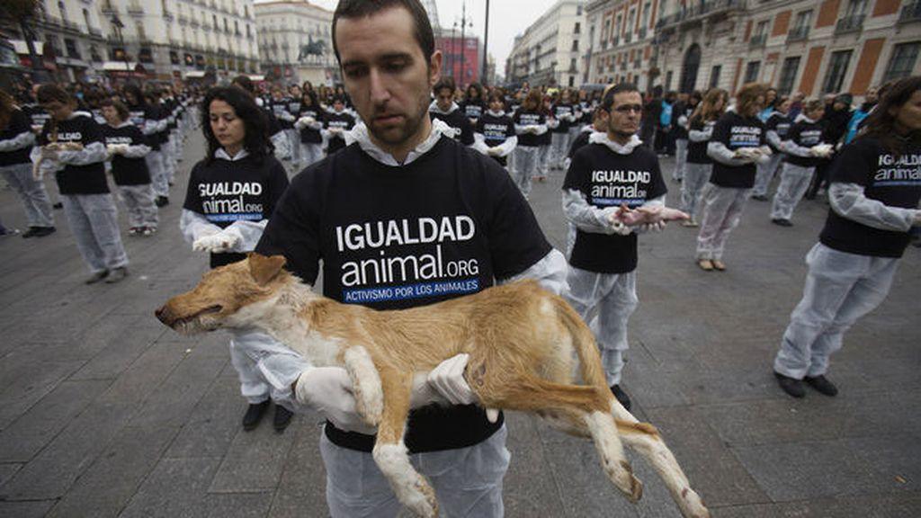 animal activist groups - 990×660