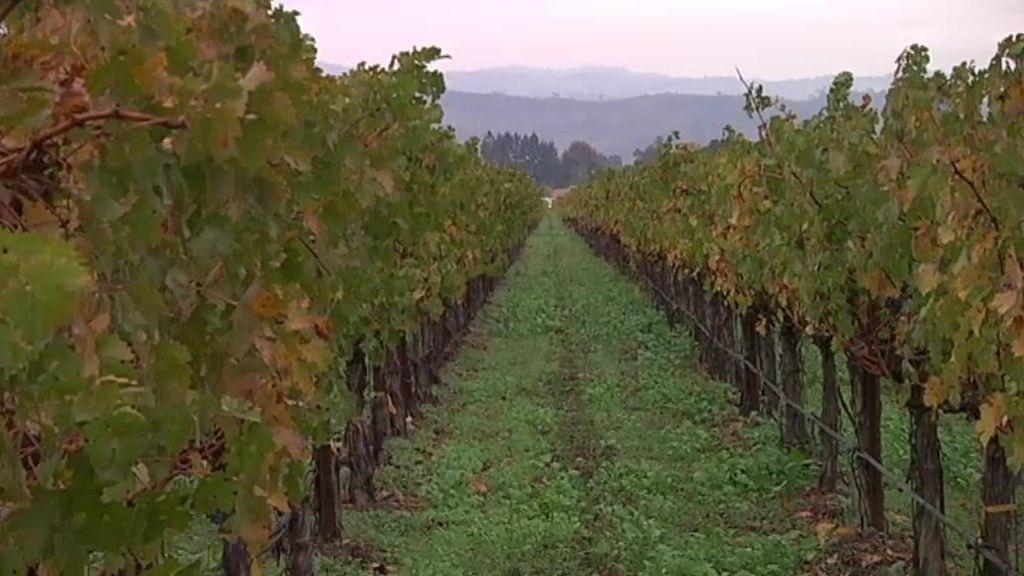 La ruta de los vinos de Francis Ford Coppola
