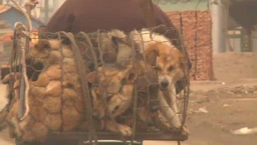 El perro, todo un manjar en Vietnam