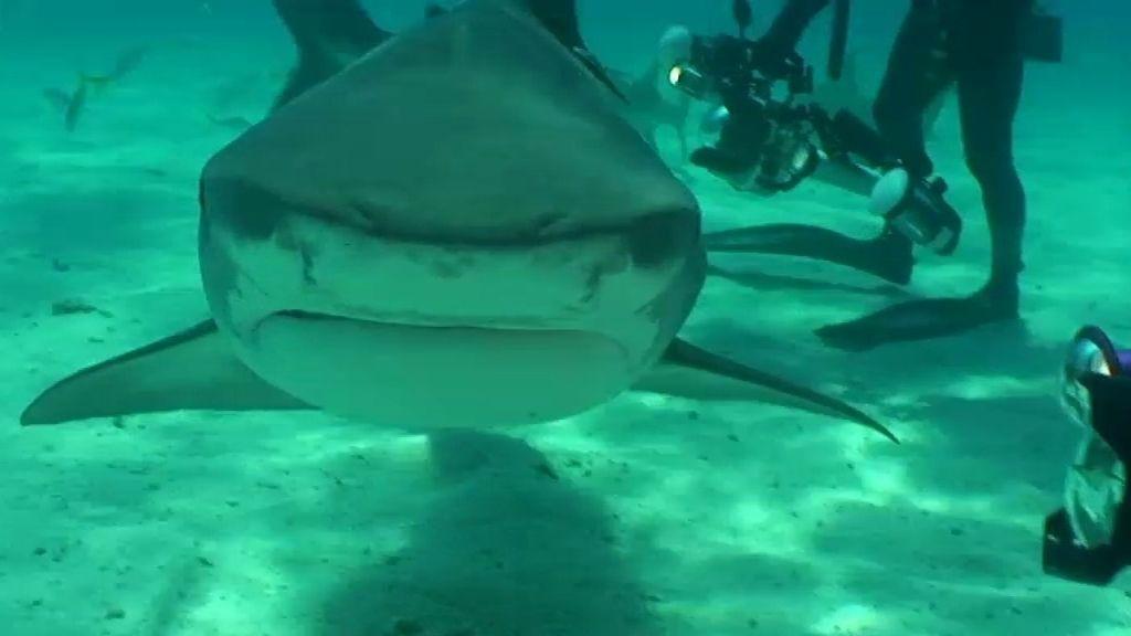Un paseo con tiburones limón