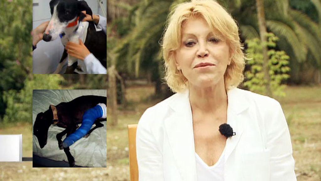 Tita Cervera, contra el maltrato de los galgos en España