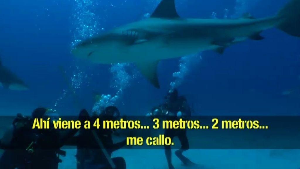 Susto con tiburones toro