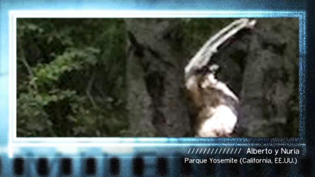 ¿Un fauno en un bosque de Yosemite?