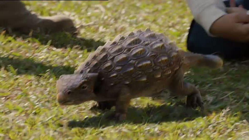 Zoe devuelve el ankylosaurio a su hábitat