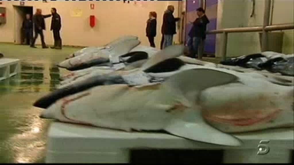 El puerto de tiburones de España