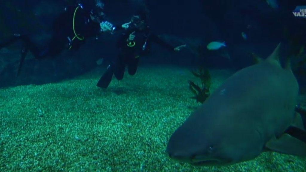 Frank entre tiburones