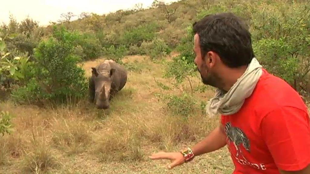 ¡Rinocerontes con el corazón a mil por hora!