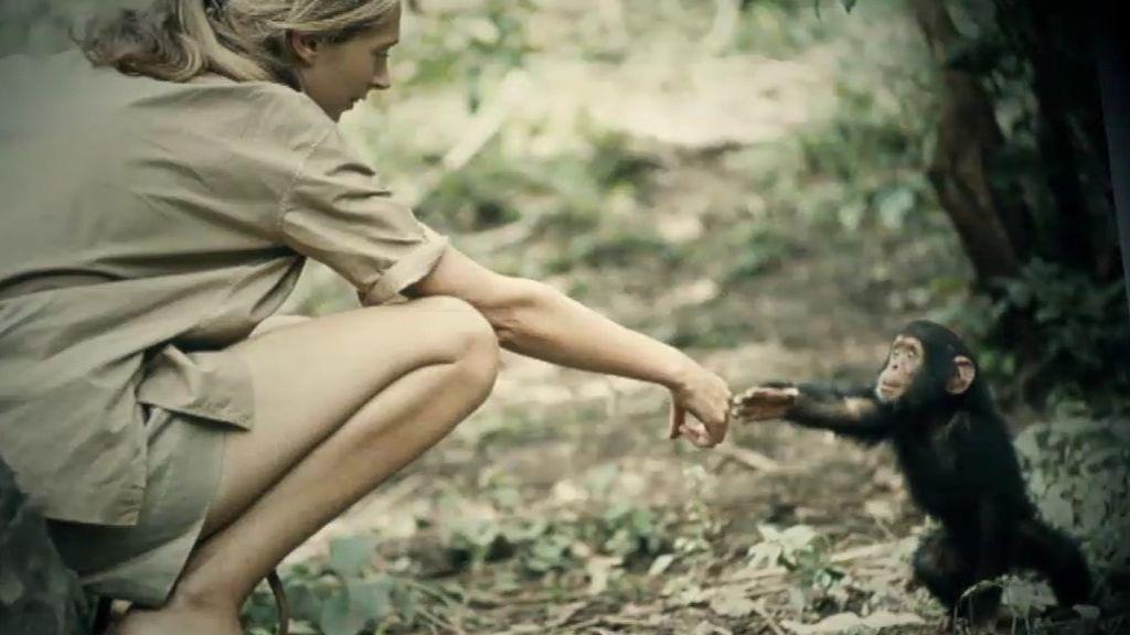 La primatóloga Jane Goodall habla con 'Cuarto Milenio'