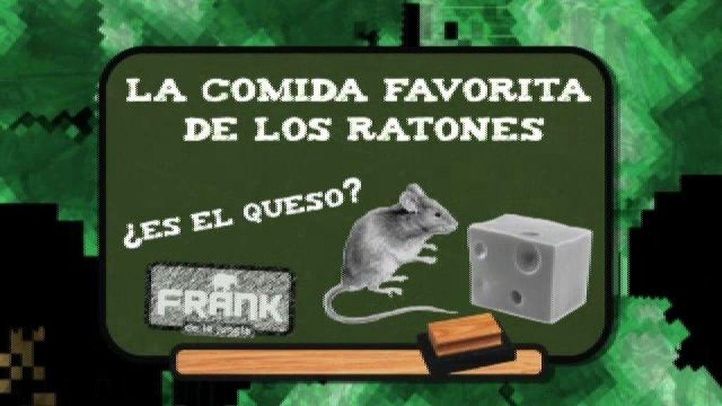 ¿Cuál es la comida preferida del ratón?