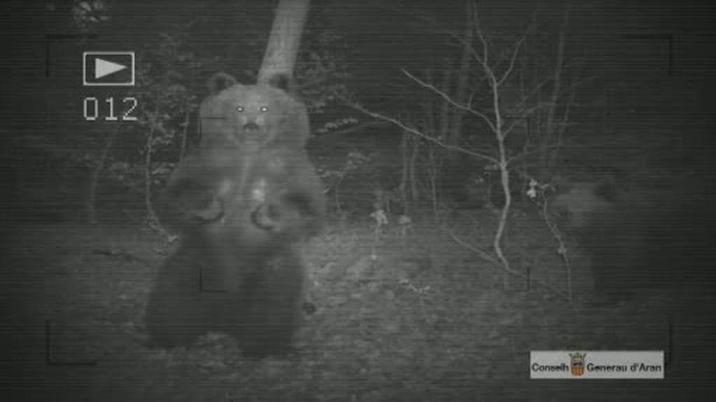 Siguiendo al oso pardo