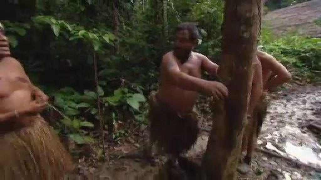 Carlos tiene que trepar un árbol
