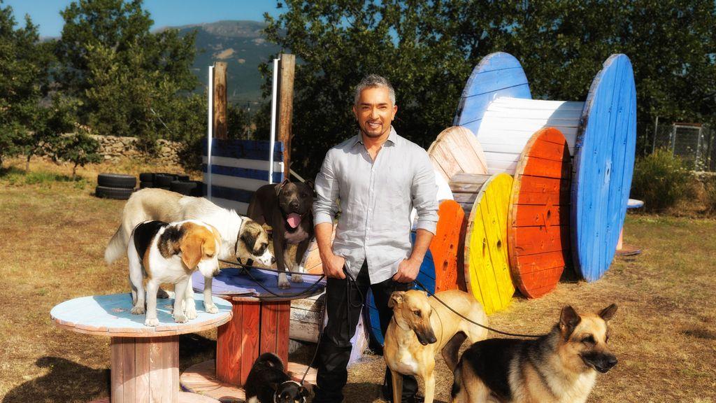 El objetivo: erradicar el maltrato animal en España