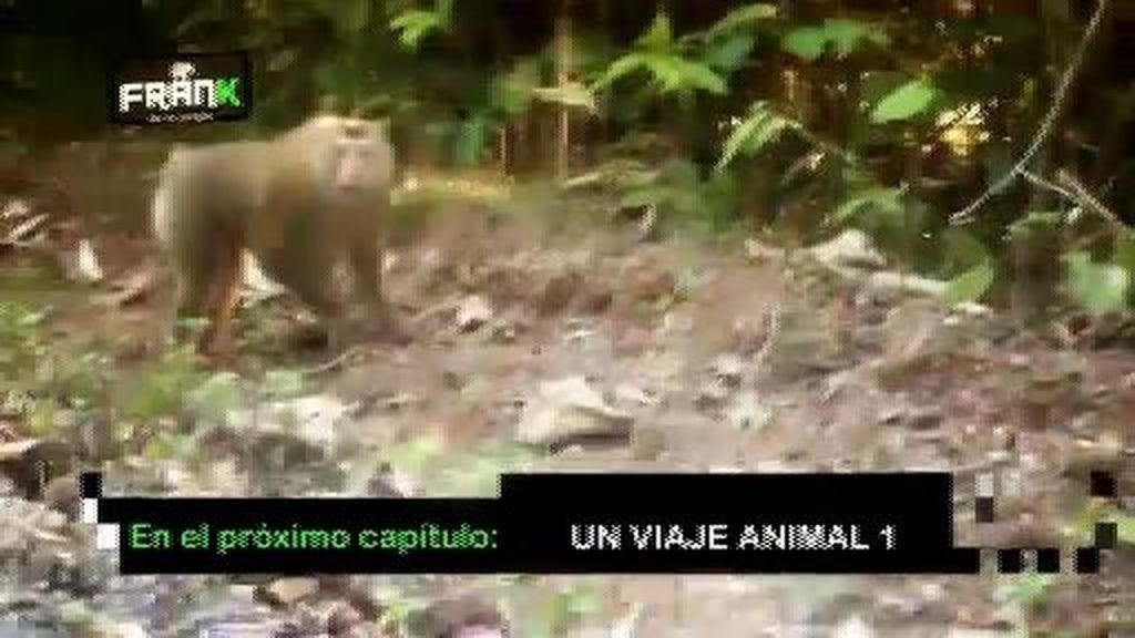 La fauna más singular en la primera parte de 'Un viaje animal'